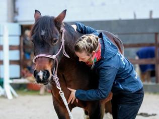 Seminar Osteopathie Pferd - Verstehen und Fühlen