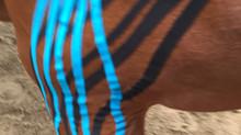 Nur bunte Streifen oder wie? - Medical Taping beim Pferd