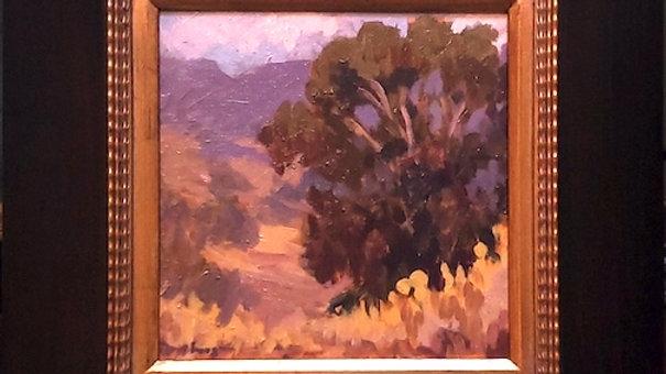 Santa Ysabel Oak