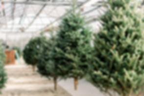 holiday-mini-2018-215.jpg