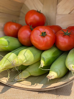 tomato and corn.jpg