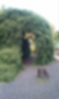 Live-Trees_02.png
