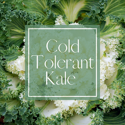 Cold Tolerant Kale.png