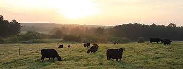 NC farm animals pic.jpg