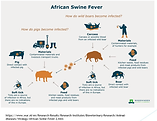 African-Swine-Fever-557x430.png