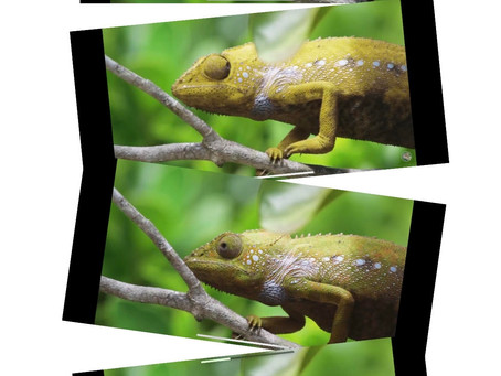 Tuesday thoughts And Being a chameleon