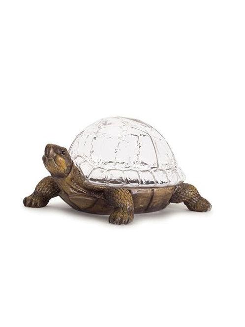 M.R. Turtle