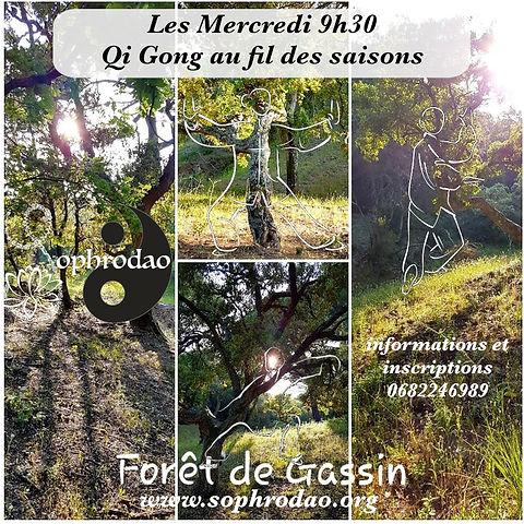 Qi Gong Forêt de Gassin.jpg