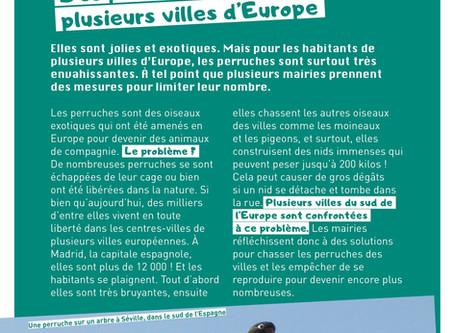 Les perruches à l'aise dans les villes européennes !