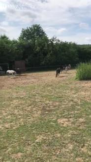 Unsere Esel und Ponys dürfen sich auf der Pferde-Matschkoppel austoben
