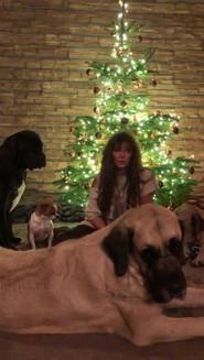 Felicia wünscht schöne Weihnachten
