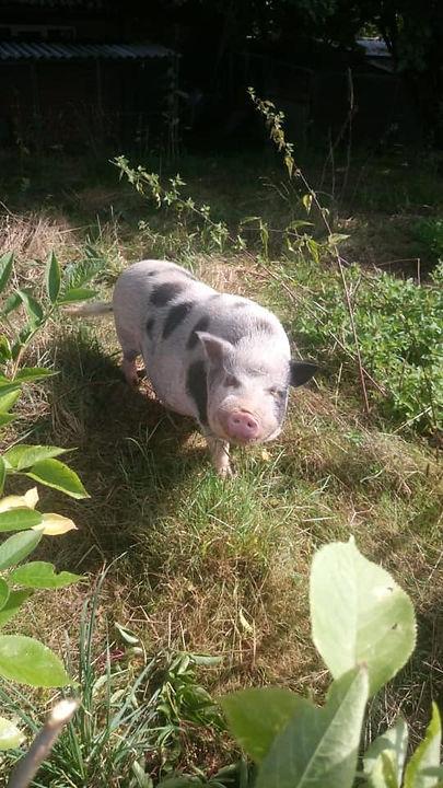 Basti Schwein.jpg