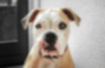 silly dog face