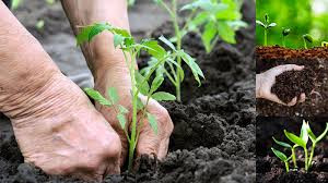How great is Organic farming