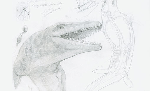 Mosasaurus sketches, scientific illustration