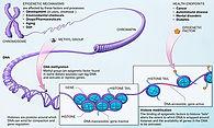 449px-Epigenetic_mechanisms.jpg