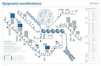 epigenetic-modifications.png