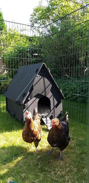 Chicken coops.jpg