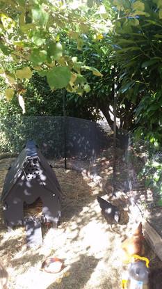 Plastic chicken coops