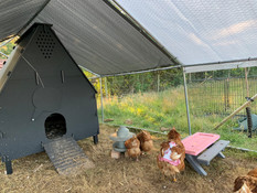Happy home for the Chickens!