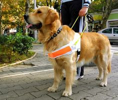 5 Things Everybody Should Know About Service Dogs