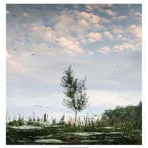 No. 55, 22nd November: River tree