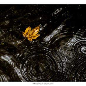 No. 52, 30th October: Autumn rain