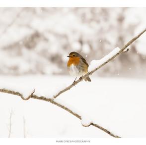 No. 60, 24th December: Christmas robin