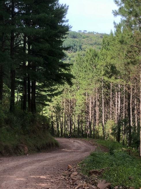 Caminho para Aldeia
