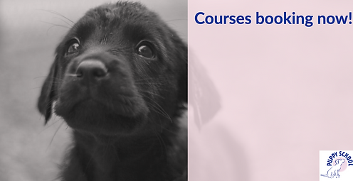 New courses Booking
