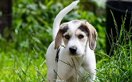 Bailey puppy.jpg