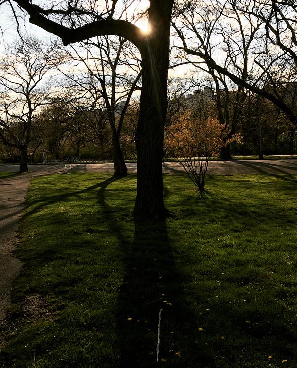 Photo by Theresa Abalos. Schenley Park. April 2020.