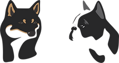 Cachorros Bulldog Francés y Shiba Inu México