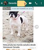testimonio criadero victory dogs breeder
