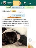 testimonio_criadero_cachorros_bulldog_fr
