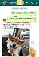 testimonio criadero cachorrita matcha.jp