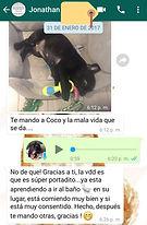 testimonio criadero bulldog frances cach