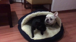 Nina y Frank eligiendo su lado en la cama