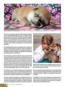 Perros Pura Sangre Victory Dogs Breeder