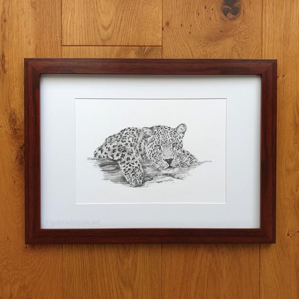 Graphite Leopard Study
