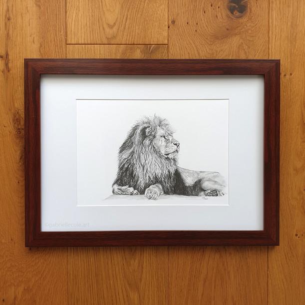 Graphite Lion Study