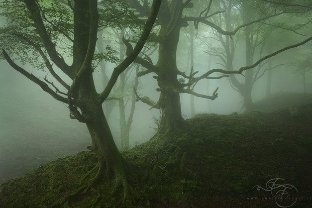 Forest1---Copy.jpg