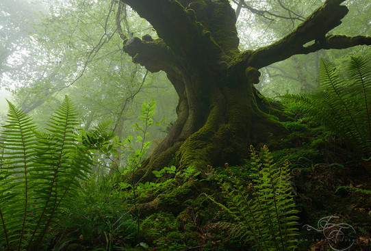 Ancestral-Roots.jpg