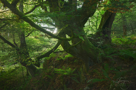 Guardians-of-the-Forest-2020.jpg