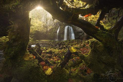 Autumnal Embrace