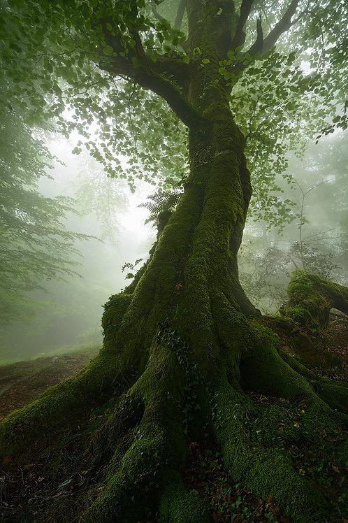 Wandering in the Fog