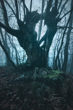 Dark Druid.jpg