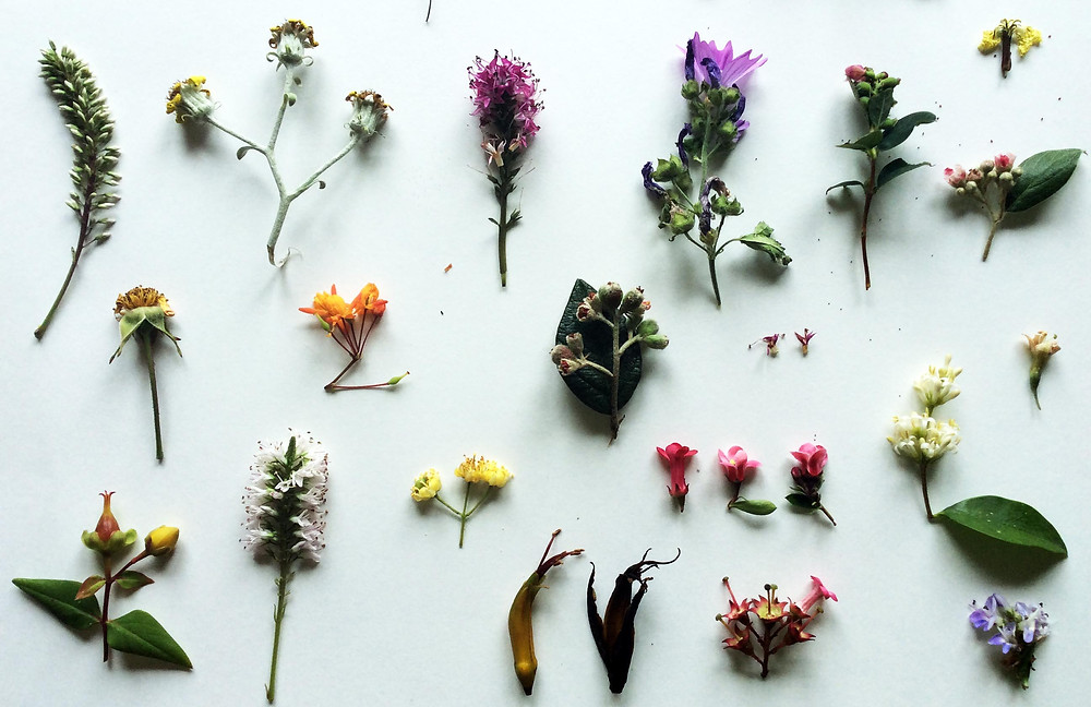 Flowers. Nice no? :))