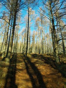 Linnorie Firewood Services (LFS)