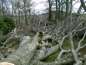 Linnorie Firewood Services (LFS) - Aberdeenshire & Moray firewood logs supplier: sales unit circular bundles of hardwood or softwood